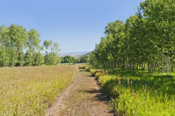 A tranquil, green country scene with a path leading through the grass field surrounded by trees