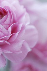 pastel pink flowers