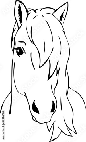 haired horse head
