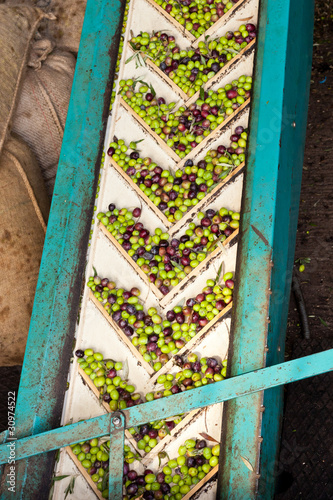 Olive Mill Conveyor Belt Feed
