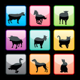 Farm animals buttons set poster