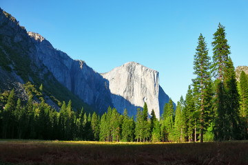 The beautiful glade in Yosemite