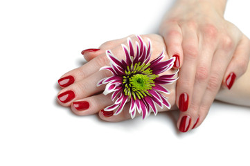 Beautiful hand with perfect nail red manicure and violet exotic