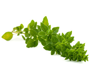 oregano isolated on white bakground