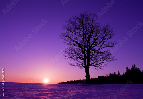 Foto op Canvas Violet lonely tree at sunset