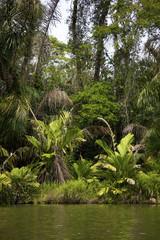 The jungle from Tortuguero river in Costa Rica