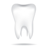 isolated white illustrations of the human tooth poster