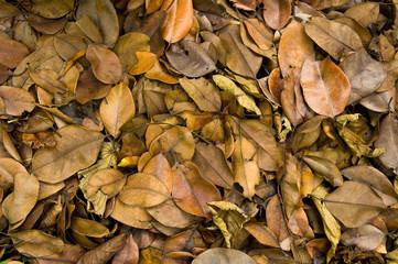 Blasted leafs