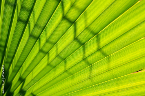 Palm tree leaf close up 3