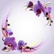 Fototapeten,orchidee,hintergrund,blume,kulissen
