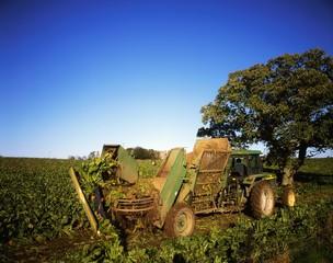 Harvesting Sugar Beet, Co Kilkenny, Ireland