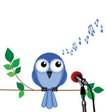 bird singing into a microphone with copy space