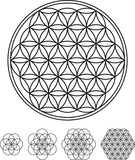 Flower Of Life Development from single circle to complex symbol. Geometrical figure, composed of multiple evenly-spaced, overlapping circles forming a flower-like pattern. Illustration over white.