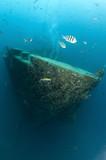 Fototapete Blau - Tauchen - Motorboot