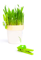 flowerpot with green grass