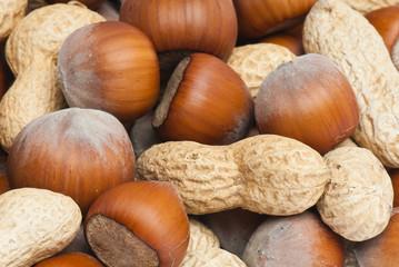 Filbert, Peanut