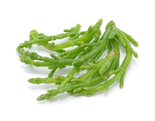 Alge, frisch