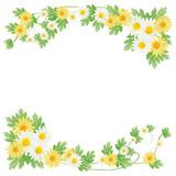 Fototapety daisy background