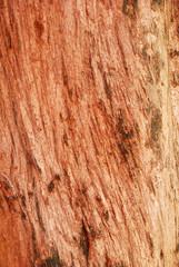 Pattern of mahogany