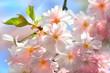 Frühlingszeit im Garten