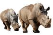 Détourage de deux Rhinocéros blancs en file indienne