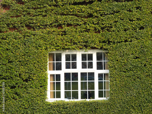 Window with wall covered in foliage