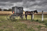Amish Carriage and Horse Princeton Wisconsin