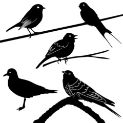 Vögel, Zugvögel
