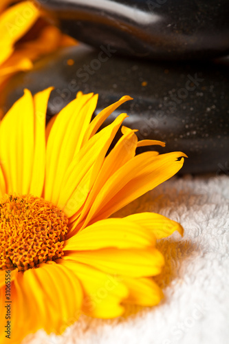 Spa stones on white towel with orange golden-daisy flower