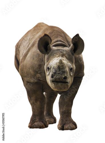 Fotobehang Neushoorn Endangered Baby Black Rhinoceros Isolated
