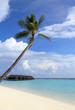 ヤシの木と空と海とコテージ Maldives