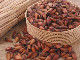 brazilian pine seeds