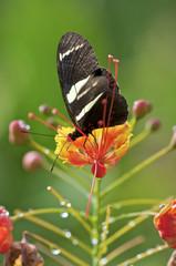 borboleta Flor Macro