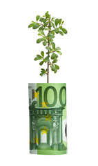 Sprout growing from euro bill