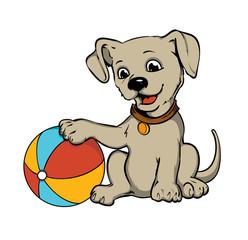 Dog With Beach Ball