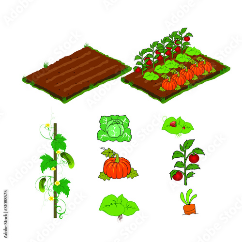 farm vegetables