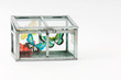 Fake butterflies inside closed glass box