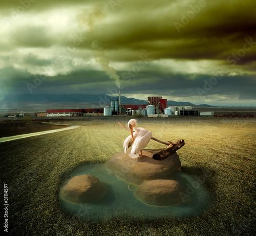 concepto de ecosistema y contaminacion