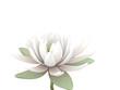 3d lotus