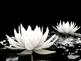 Fototapety 3d lotus on water
