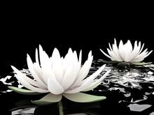 3d lotus på vatten