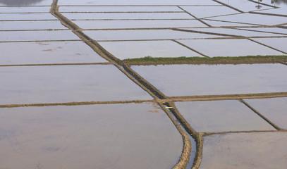 Reisanbau in Südbrasilien