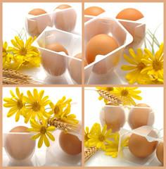 Bio eggs - Uova biologiche