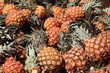 Pineapples at a market in Cuba