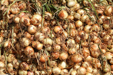 Onions at a marketplace in Cuba