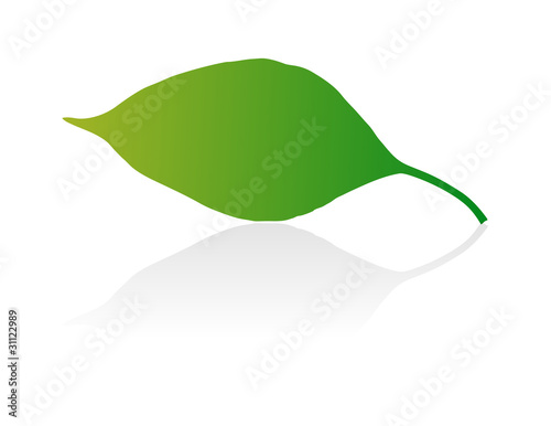Green vector leaf on white background