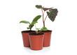Group of Plant Seedlings
