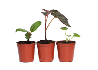 Row of Three Plant Seedlings