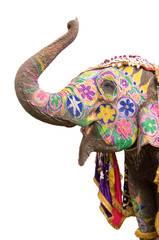 colorful elephant,Jaipur, Rajasthan, India