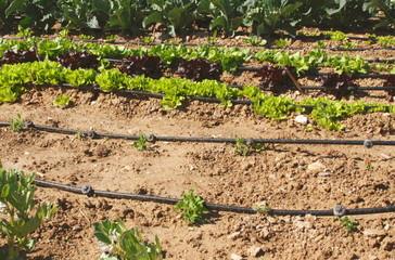 riego por goteo y hortalizas
